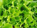 Gardening tips for May: Thin lettuce